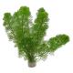 Rośliny w pęczkach - Rośliny w pęczkach to kilka młodych roślin lub pędów z przycinkiPosiadają nieliczne lub brak korzeni, które wyrastają zaraz po posadzeniu.To w większości proste w uprawie i szybkorosnące rośliny, które nadają się idealnie do fazy uruchamiania akwarium.