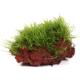 Gotowe dekoracje - Rośliny na lawie i korzeniach to egzemplarze hodowane w specjalnych warunkach pozwalających na naturalne zaszczepienie sadzonek na podłożu. Pozwalają one zaaranżować akwarium w wygodny sposób na zasadzie układania gotowych elementów dekoracyjnych. Dostępne zestawy na la...