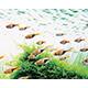 Uniwersalne (akw. towarzyskie) - Nawozy do akwarium towarzyskiego, które nie jest typowym akwarium roślinnym i posiada dużo ryb, które dostarczają w sposób naturalny kluczowe makroelementy. W akwariach tego typu (tzw. ogólnych) dodatkowa suplementacja azotu i fosforu nie ...