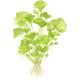 Lotosy i grzybienie - Jedne z najpięknięjszych roślin akwariowych. Posiadają duże rozłożyste liście i mocny system korzeniowy.