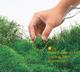 Miejsce sadzenia - Podział roślin ze względu na miejsce ich sadzenia w akwarium. Jeśli szukasz rośliny o konkretnym wyglądzie lub kolorze kliknij wygląd i kolor Wybierz podkategorię: