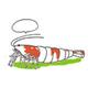 Krewetki i akcesoria - Kategoria dla miłośników krewetek. Znajdziesz tu wszystko co potrzebne do pielęgnacji i rozmnażania tych interesujących i niezwykle dekoracyjnych mieszkańców akwarium.