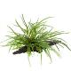 Rośliny na korzeniach - Rośliny uprawiane przez wiele tygodni na korzeniach, dzięki czemu są z nimi zrośnięte na stałe.Gotowy element dekoracyjny do Twojego akwarium. Także w wersji z przyssawkami do przyklejenia do szyby akwarium.
