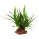Rośliny na kamieniach - Rośliny uprawiane przez wiele tygodni na kamieniach (lawie wulkanicznej), dzięki czemu są z nimi zrośnięte na stałe. Gotowy element dekoracyjny do Twojego akwarium.