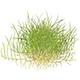 Rośliny akwariowe - Największy wybór roślin akwariowych i 100% dostępności!Ponad 200 gatunków i odmian o różnorodnej barwie i pokroju liści. Oferta przygotowana przez profesjonalnych botaników zajmujących się zawodowo akwarystyką roślinną. Promocja: bezpłatna wysyłka kurierem ...