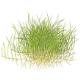 Przód akwarium - Rośliny na pierwszy plan akwarium.Jeśli szukasz roślin na typowy trawniczek kliknij rośliny trawnikowe