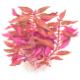 Środek akwarium - Rośliny do posadzenia na drugim planie lub na środku akwarium.Jeśli szukasz konkretnego kształtu lub koloru liści kliknij wygląd i kolor