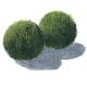 Oryginalny wygląd - Gatunki i odmiany dekoracyjne o nietypowych kształtach i oryginalnych wzorach liściowych.Perełki do Twojej kolekcji roślin.
