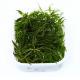 Rośliny w wanienkach - Rośliny w plastikowych pojemnikach oferowane w dużych porcjach.