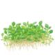 Rośliny trawnikowe - Drobne gatunki i odmiany pozwalające stworzyć efektowny trawnik na pierwszym planie akwarium.
