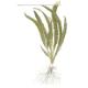 Rośliny wysokie - Rośliny dorastające do ponad 50cm wysokości.Idealne do dużych akwariów oraz zbiorników z pielęgnicami i dyskowcami.Świetnie maskują wszelki sprzęt w akawarium.
