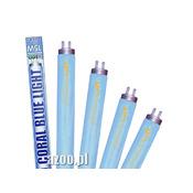 20W świetlówka T8 AZOO CORAL BLUE LIGHT  [59cm]