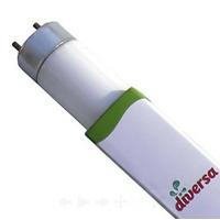 36W świetlówka T8 Diversa Natural 10000K (120cm)