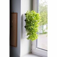 AQUAEL Moduł ścienny Versa Garden Herbs - ZIELNIK, zielone ściany