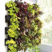 AQUAEL Moduł ścienny Versa Garden zestaw startowy - zielona ściana