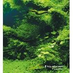 AquaForest Lava Soil [5l] - podłoże na bazie lawy wulkanicznej
