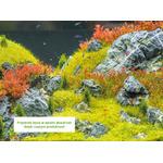 AquaForest RED Boost [2000ml] - nawóz wybarwiający czerwień liści