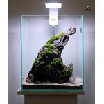 Aranżacja hardscape nr 20 (30x30x35cm) - ze zdjęcia + rośliny