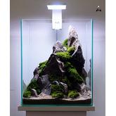 Aranżacja hardscape nr 21 (30x30x35cm) - ze zdjęcia + rośliny