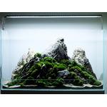 Aranżacja hardscape nr 27 (60x30x35cm) - ze zdjęcia + rośliny