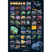 AZOO Corals Poster - Plakat 3D + tuba ochronna