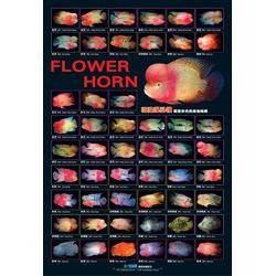 AZOO Flower Horn Poster - Plakat 3D + tuba ochronna