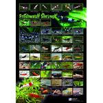 AZOO Freshwater Shrimp Poster (krewetki) - Plakat 3D + tuba ochronna