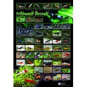 AZOO Freshwater Shrimp Poster - Plakat 3D + tuba ochronna