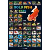 AZOO Goldfish Poster - Plakat 3D + tuba ochronna