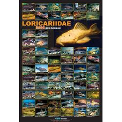 AZOO Loricariida Poster - Plakat 3D + tuba ochronna
