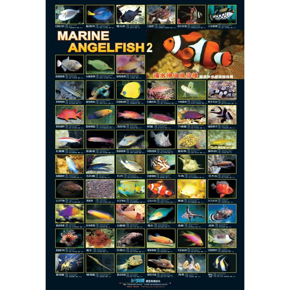 AZOO Marine Fish Poster - Plakat 3D + tuba ochronna