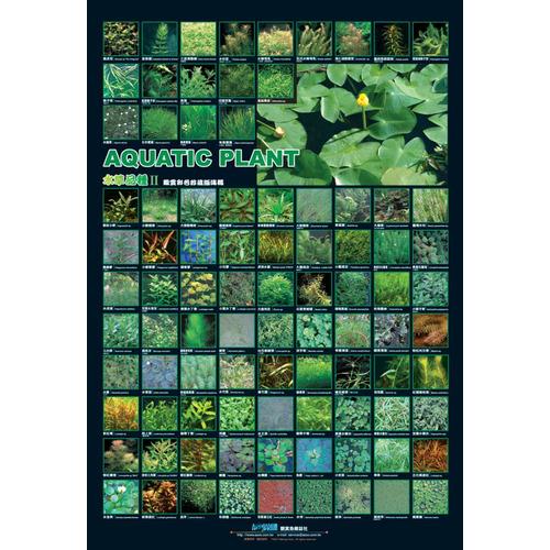 AZOO Native Aquatic Plant Poster - Plakat 3D z roślinami + tuba ochronna