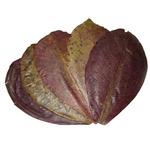 Benibachi Leaf [5 szt.] - liście 17-25cm
