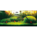 Blyxa japonica - TROPICA in-vitro 12GROW