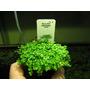 Bon 500 PLN na zakup roślin akwariowych, usługa doboru gratis
