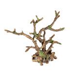 BONSAI BROWN - Korzeń bonsai bez liści ROZGAŁĘZIONY 25,5x10x24cm