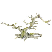 BONSAI GREY - Korzeń bonsai bez liści SZARY 35,5x10x17,5cm