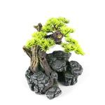 BONSAI SM [16.5x16.5x18cm] - drzewko bonsai z igłami
