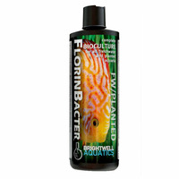 Brightwell FlorinBacter [500ml] - bakterie do mocno zarybionych akwariów