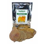 Catappa Leaves Large XL [10 szt] - duże liście ketapangu