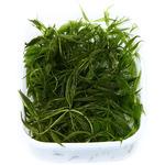 Ceratophyllum demersum Foxtail - TROPICA (wanienka/porcja)