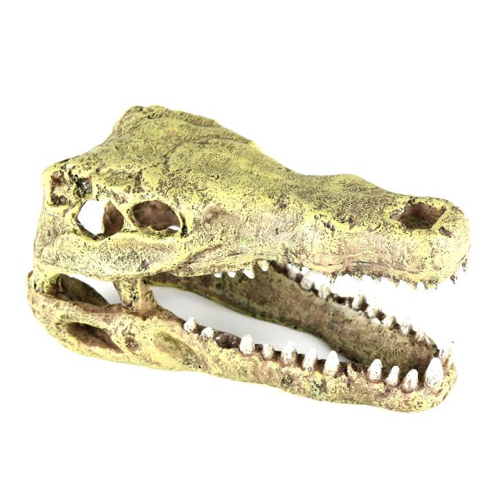 CROCODILE HEAD M [19.5x9.5x10.5cm] - czaszka krokodyla