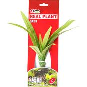 CRPTOCORYNE 8 [20cm] - Rośliny z miękkiego, tkanego materiału