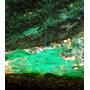Cyanobacteria killer [kapsułka] - preparat na sinice