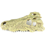 Czaszka aligatora GÓRNA SZCZĘKA 28,5x14,5x8cm