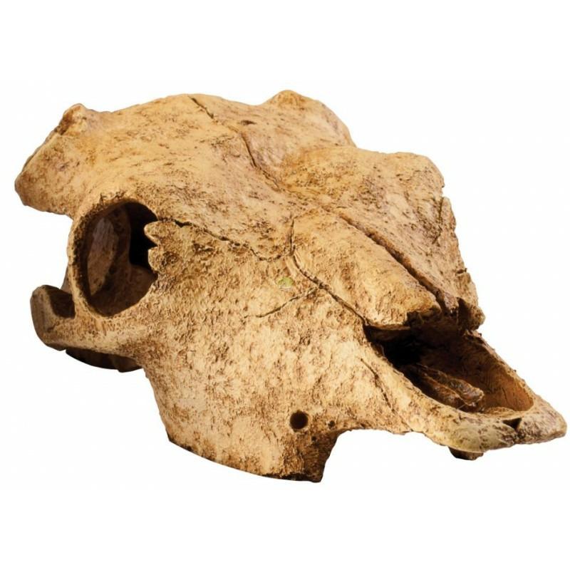 EXO TERRA Buffalo Skull - czaszka bawoła