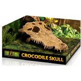 EXO TERRA Crocodile Skull - czaszka krokodyla