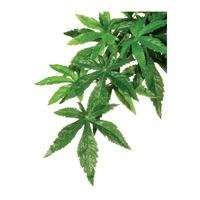 Exo Terra roślina wisząca Zaślaz 55cm