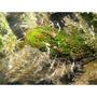 Femanga Wurzel Aktiv [250ml] - preparat na ślimaki, wypławki i hydrę