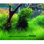 Ferka Aquashade [250ml] - makroelementy dla roślin wolnorosnących